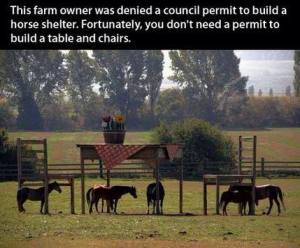 This farmer was denied a council permit to build a horse shelter.  Fortunately, you don't need a permit to build a table and chairs.  There is always a way.