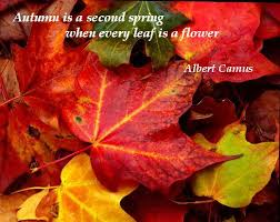 Autumn is the second spring when every leaf is a flower - Albert Camus