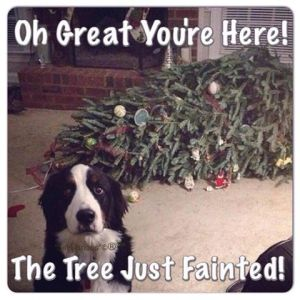 Oh great you're here!  The tree just fainted!  Guilty is still guilt no matter how creative the story.